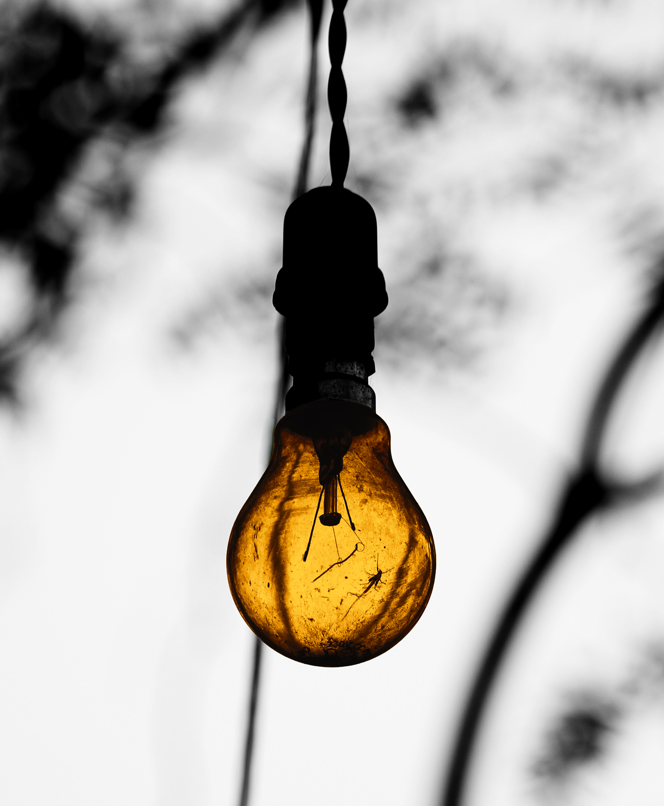 bulb out